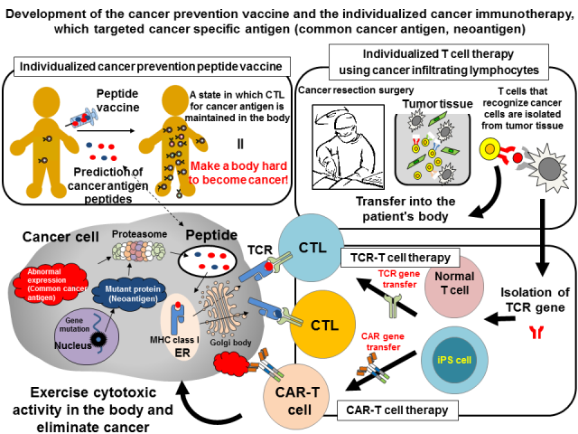 Division of Cancer Immunotherapy (Kashiwa) | Exploratory Oncology