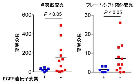 図1. EGFR遺伝子変異の有無による肺がんの体細胞変異数の比較検討