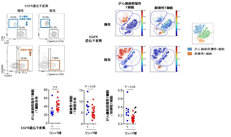 図3. EGFR遺伝子変異の有無のよる肺がん組織内の免疫細胞数のフローサイトメトリーおよびCyTOFを用いた比較検討