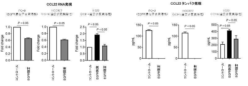 図4. 肺がん細胞株を用いたEGFRシグナル刺激 / 阻害によるCCL22発現の検討