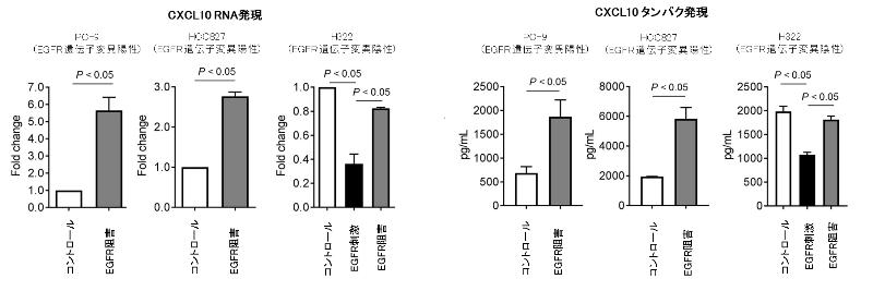 図5. 肺がん細胞株を用いたEGFRシグナル刺激 / 阻害によるCXCL10発現の検討