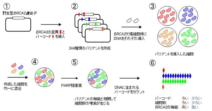 MANO-B法の概略図