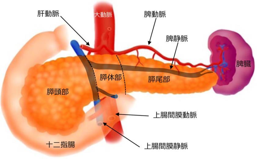 膵臓の病気と治療について | 国...